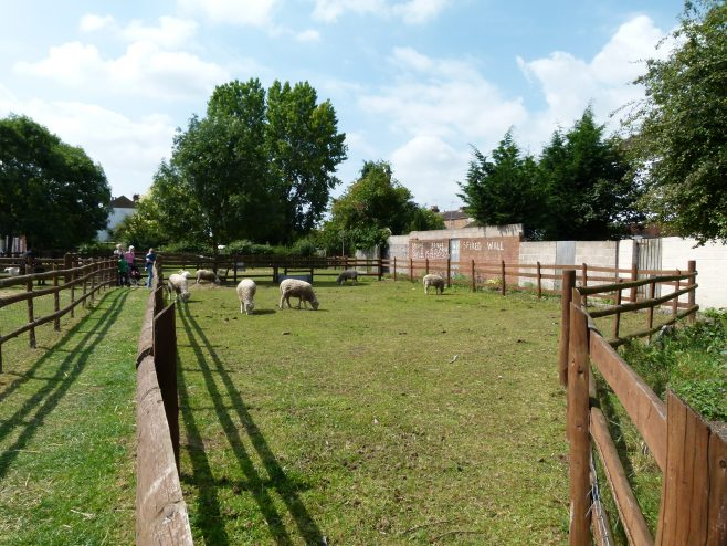 Photographs of the City Farm